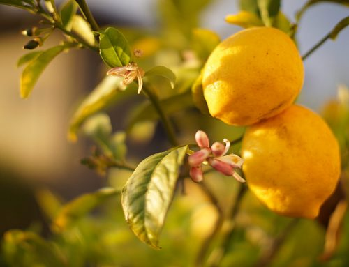 Uses and properties of lemon on the skin: here's how to benefit from this natural ingredient
