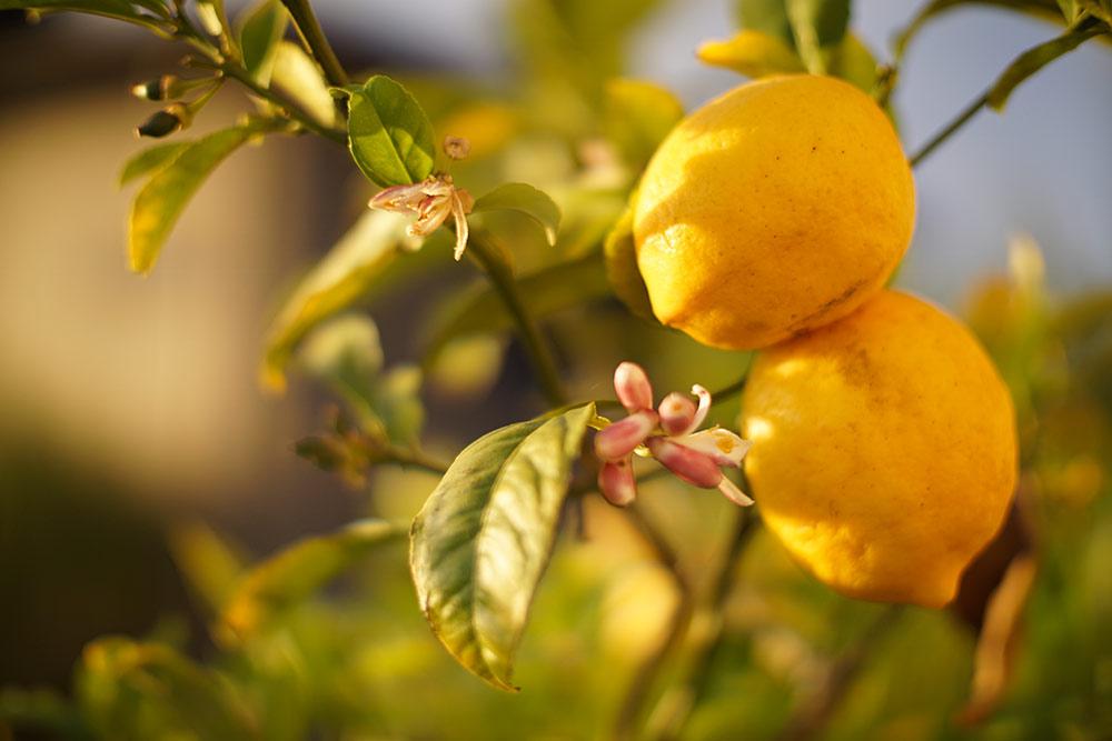 linea limone della Riviera del Lago di Garda , cosmesi naturale